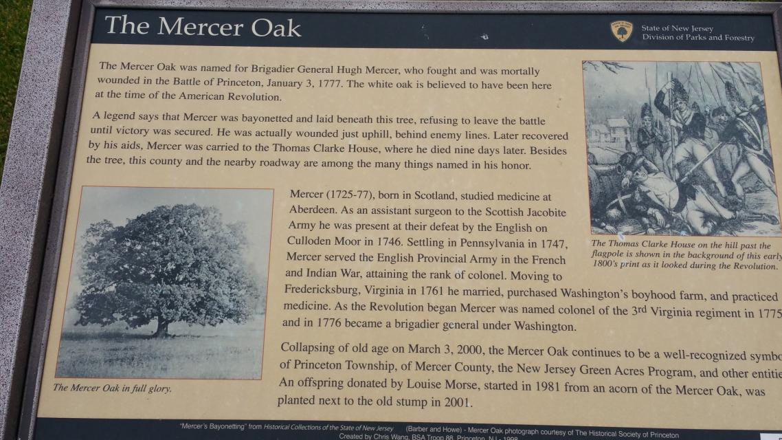 The Mercer Oak - Princeton - NJ - US - Historical Marker Project